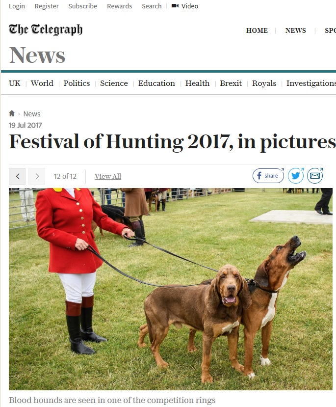 Bloodhounds Telegraph