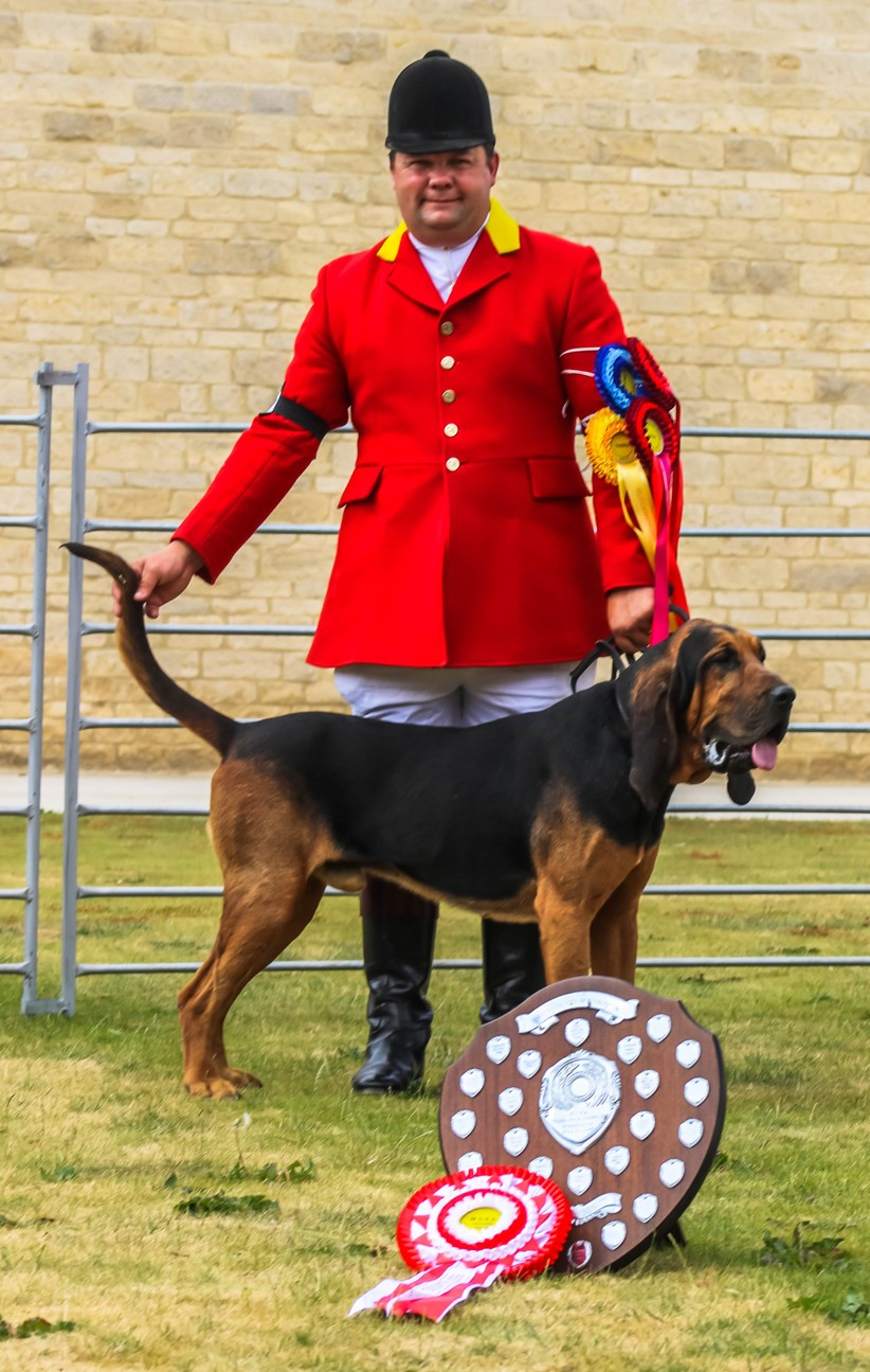 Bloodhound Champion